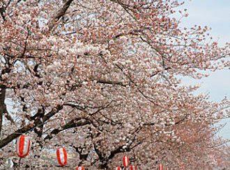 第27回 しんまち桜まつり